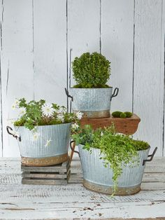 Our handsome zinc planters have a beautifully mature patina and a host of wonderfully honest, industrial details, from their graceful fluted rim to their no-nonsense rusty rivet-style base.