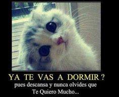 ..te quiero Mucho :)