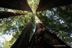 Save the Redwoods - Ian Somerhalder Foundation