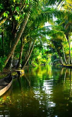 With the Arabian Sea in the west, the Western Ghats towering 500-2700 m in the east and networked by 44 rivers, Kerala enjoys unique geographical features that have made it one of the most sought after tourist destinations in Asia. A constant climate, a long shoreline with serene beaches, tranquil stretches of emerald backwaters, lush hill stations, exotic wildlife and waterfalls. It is a great place to visit if you're looking for an Ayurveda health holiday.