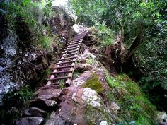 Skeleton Gorge in Kirstenbosch Gardens Skeleton Gorge is arguably the most adventurous trail within the Kirstenbosch grounds. It starts off from the Fragrance Garden and follows Skeleton Stream up Table Mountain. The climb up is steep and can be nerve-wracking but the reward of being atop the mountain is priceless! It takes about 6 hours to complete this hike. http://news-events.sleeping-out.co.za/top-10-hiking-spots-in-south-africa/