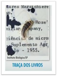 traca_livro