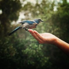 """Ser livre é ser leve. É ter um profundo senso de admiração internamente. É não depender de nada externo para experimentar felicidade. É não ser escravo de algo que pode me elevar mas que foge do meu controle. Essa é a verdadeira liberdade: a que nunca é perdida e a que nunca dependente de nada. Liberdade é minha propriedade."""" BK Shikha"""