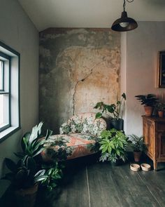 "my-room-design:  ""I'm very obsessed with plants  """