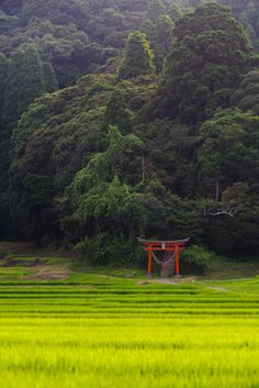 Forest of a village shrine ,Japan Japan Landscape, Forest Landscape, Landscape Photos, Landscape Photography, Nature Photography, Image Japon, Japan Countryside, Photos Black And White, Japanese Photography
