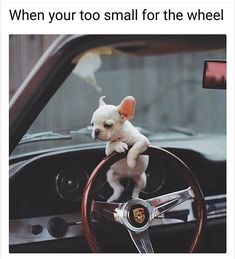 Animal Memes That Are Just Way Beyond Funny - 16