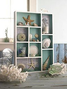 Seashell collections