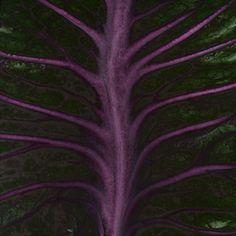 The Secret Life Of Plants on Behance