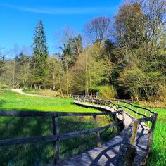 A bridge over swamp land at Wakehurst Gardens.. #wakehurstplace #bridge #nature #gardens #nationaltrust #seasonal #spring #landscape #mansion #historic #history #architecture #countryside #colourful #sunny #beautyspot #scenic #england #beautiful #contrast #sussex