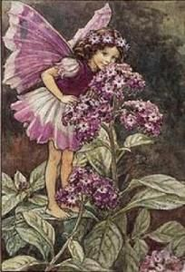 Illustration for the Heliotrope Fairy from 'Flower Fairies of the Garden'. A girl fairy stands on a heliotrope leaf, leaning down to smell the flowers. By English illustrator, Cicely Mary Barker Cicely Mary Barker, Illustration Blume, Fantasy Illustration, Illustration Girl, Flower Fairies, Fairies Garden, Fairy Pictures, Vintage Fairies, Beautiful Fairies
