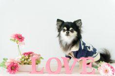 Mu✴︎Runa photographs の2月 LOVE 撮影  | Mu*Runa (ム・ルーナ)