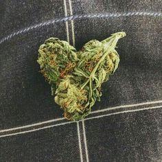 Heart shaped weed
