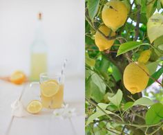 Playing With Food: Mellow Yellow by decor8, via Flickr