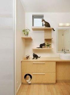 Pet Ideas for the Home | http://homechanneltv.blogspot.com/2014/09/pet-ideas-for-home.html #cats