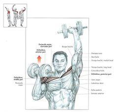 top shoulder exercises - Arnold Press