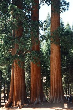 sequoia national park hindu singles Voted best toyota repair shop in orange county and mission viejo toyota repair orange county  blue bird, sunnybrook, airstream, national.
