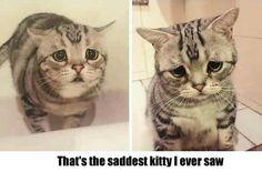 cute saddest kitty