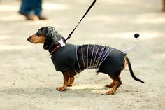.slinky dachshund dog! Cute Halloween costume!.