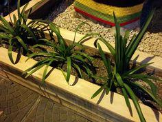 Corart - Diseño de Fachada Frida *plantitas*