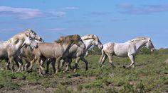 Resultado de imagen para caballos caminando