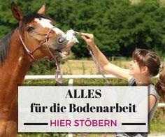 Basissinne des Pferdes - Team Shetty-Sport - Be Shettylicios! Animals And Pets, Cute Animals, Horse Training, Horse Love, Fur Babies, Equestrian, Pony, Parenting, Horses