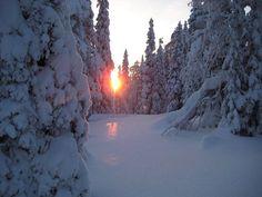 Winter Light, Winter Beauty, Landscape Pictures, Let It Snow, Finland, Winter Wonderland, Landscapes, Scene, Places