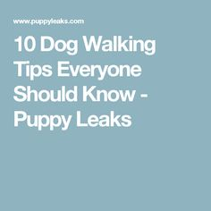10 Dog Walking Tips Everyone Should Know - Puppy Leaks