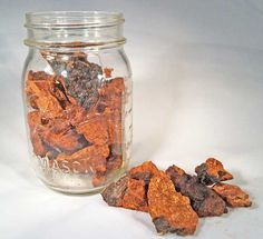 Chaga mushrooms  Instructions for tea and tincture