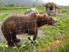 @ Alaska Wildlife Conservation Center (AWCC)