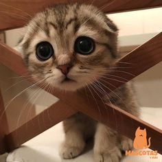 Love Cute Animals shares pics of playful animals, cute baby animals, dogs that stay cute, cute cats and kittens and funny animal images. Cute Baby Cats, Cute Cats And Kittens, Cute Little Animals, Cute Funny Animals, Kittens Cutest, Kitty Cats, Funny Cats, Siamese Cats, Sad Kitty