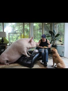 Esther the Wonder Pig. You planned on sharing that right?