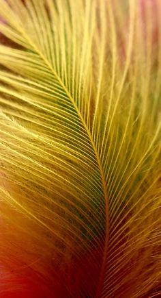 Feather macro photography