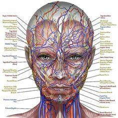 """1,195 Me gusta, 4 comentarios - All Dental / Вся Стоматология (@alldental) en Instagram: """"Анатомия.Вспоминаем,изучаем ,запоминаем :) #medical #medicine #medstudent #medschool…"""""""