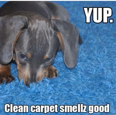 Clean Your Carpets Not Just For You Best Carpet Cleaning Solution By Hand