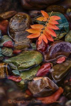 autumn leaves in stream