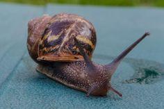 Snails move pretty fast when taken macro photography.