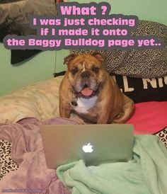 www.facebook.com/groups/BaggyBulldogWorld