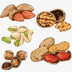 Plant Illustration, Watercolor Illustration, Desserts Drawing, Food Png, Food Clipart, Food Sketch, Watercolor Food, Protein Rich Foods, Food Painting