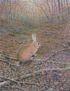 「野兎のいる風景(秋) 」 続木唯道/油彩(P15号)/1996  風景画の中によく小動物を登場させることがある。 すると、たちまち動物が画面の主役になって、風景全体が活気づいてくる。 野兎・狸・鹿・テン・リス・キジバト等がこれまで描いた動物たちだが、そのモデル探しは簡単ではない。  学校の理科室に展示してある狸やテンの剥製をお借りして撮った写真をもとに、棲んでいたであろう自然の中に彼らを甦らせる、という方法も試みた。  我が家の庭を悠然と徘徊していた若いキジバトが意外にも美しい容姿で目に適った。  彼らが見え隠れする情景こそ自然の一コマであり魅力である。