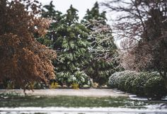 A Winters Dusting.  Continuing my post this week from last weekend's ice storm, this is the view from under the tree next to the pond. You can see the pond photo if you missed 1 photo back.  Once again, I photographed this scene on #lexarmemory using my #Lensbaby Edge 80 lens.