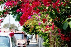 18 Mejores Imágenes De Enredaderas Con Flores Climbing