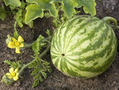 Don't let your gardens suffer from heat exhaustion. Use these 6 tips to stifle the summer growing slump.