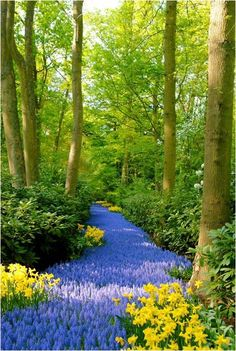 When nature builds paths - Quando la natura costruisce sentieri