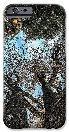 Tree IPhone 6s Case featuring the photograph 1st Tree by Gandz Photography