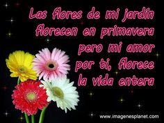 Imagenes de Flores Bonitas Con Versos De Amor
