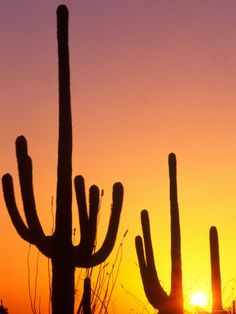 Saguaro Sunset, Saguaro National Park, Arizona