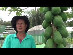 MOTIVA A TU PLANTA DE AGUACATE ENANA A ECHAR RAMAS NUEVAS 2 (Avocado seeded in pot) - YouTube