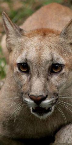 Puma by NiqueGata