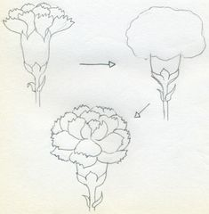 Carnation Flower Drawing | If you would like to draw Carnation that is in full bloom, simply ...