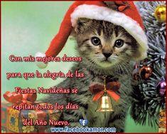 Mensajes de Navidad para Amigos   Tarjetas de Navidad Crochet Hats, Beautiful, Social, Google, Quotes, Christmas Slogans, Christmas Pictures, Retro Christmas, Vintage Christmas